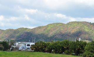 実家の風景.JPG
